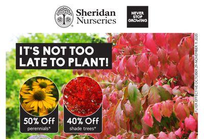 Sheridan Nurseries Flyer October 29 to November 11