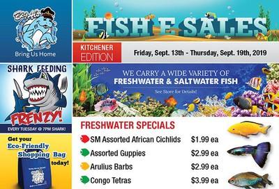 Big Al's (Kitchener) Weekly Specials September 13 to 19