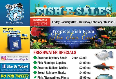 Big Al's (Newmarket) Weekly Specials January 31 to February 6