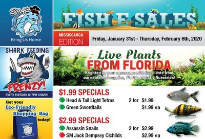 Big Al's (Mississauga) Weekly Specials January 31 to February 6