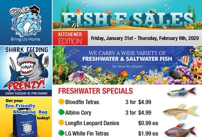 Big Al's (Kitchener) Weekly Specials January 31 to February 6