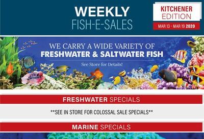 Big Al's (Kitchener) Weekly Specials March 13 to 19
